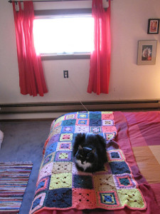 cat bedroom cleanup