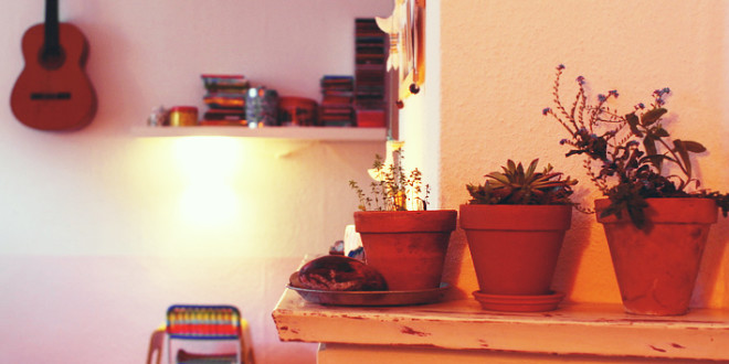 8 Air-Purifying Indoor Plants