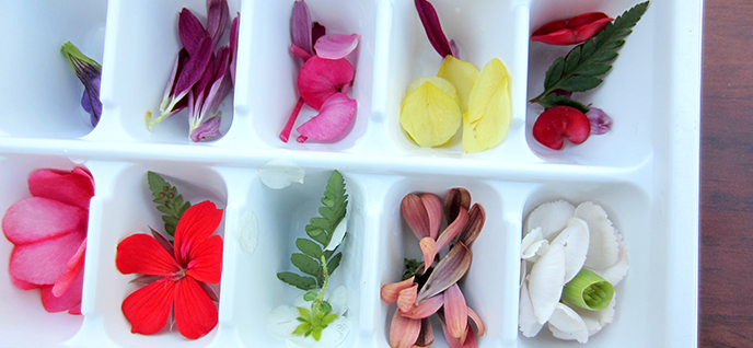 flowers in ice cube tray