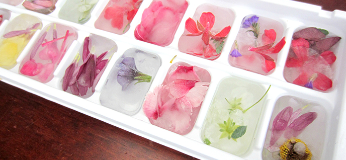 ice cube tray freezer
