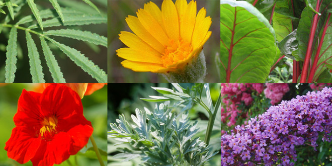 8 Useful Outdoor Plants