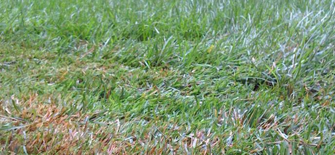 grass height