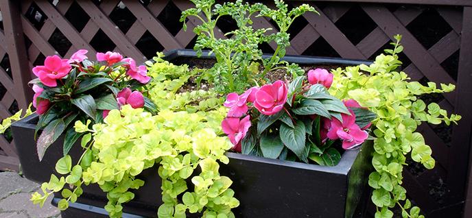 rose container
