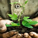 8tipsforhealthyplants