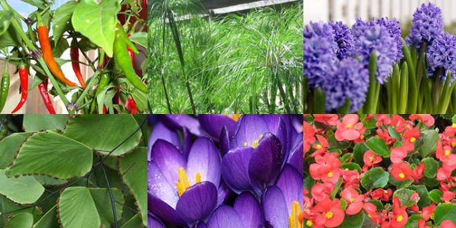 Indoor Kitchen Plants