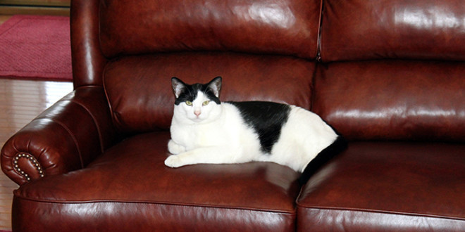 Clean Your Leather Sofa