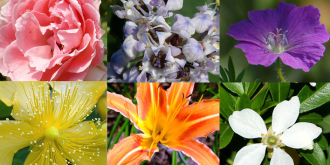 15 Plants That Don T Need Water