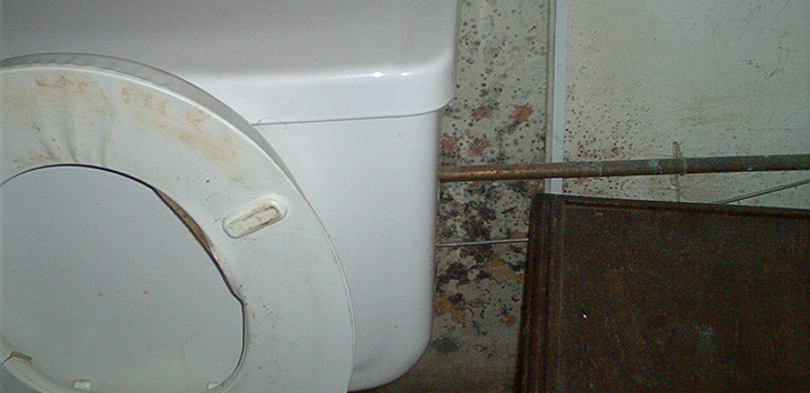 How To Remove Mold In Your Bathroom - Groomed Home
